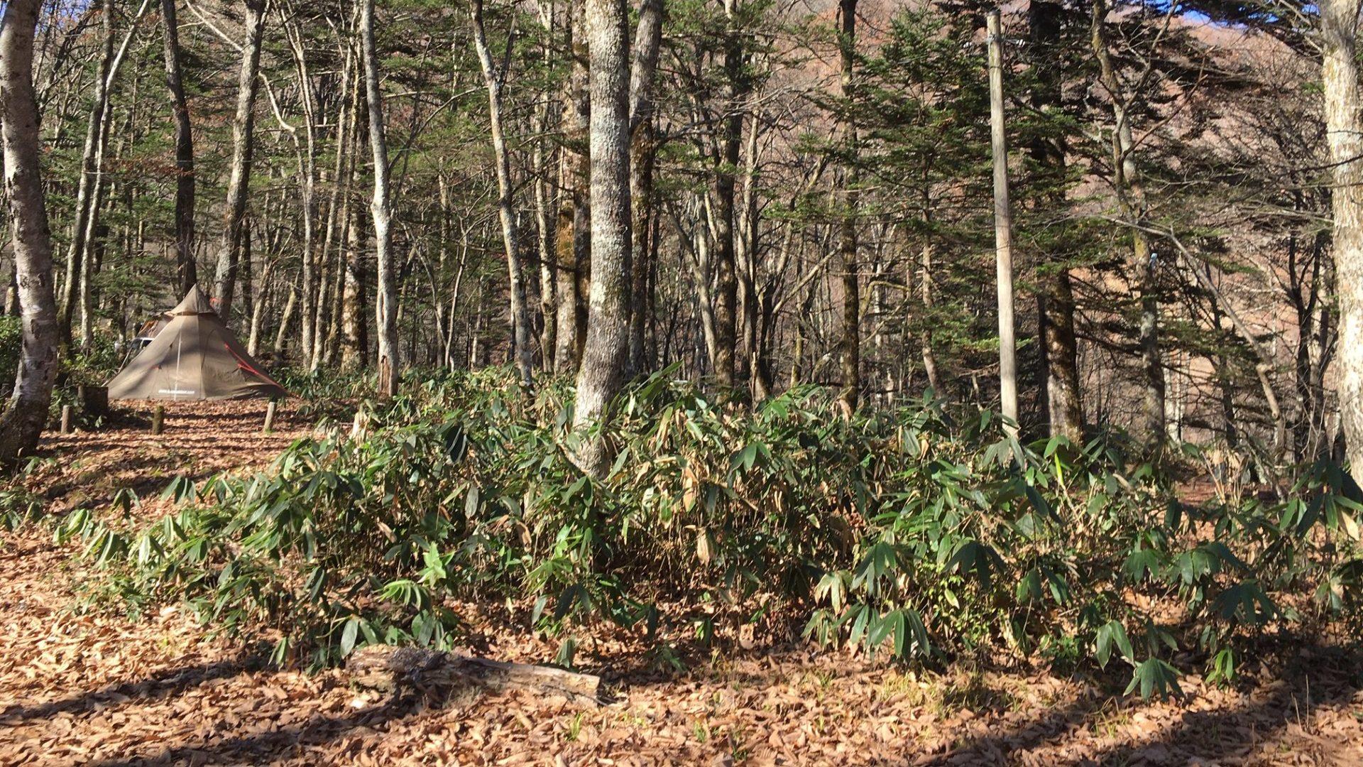 枯れ葉いっぱい